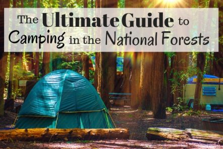 The ultimate guide to camping in the national forests.