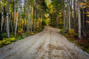 Road in National Forest to remote camping