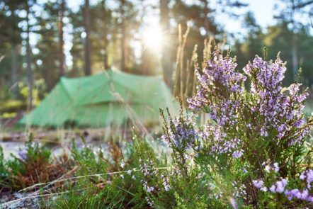 Spring camping tips, essentials, and destinations